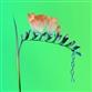 Skin Companion EP I